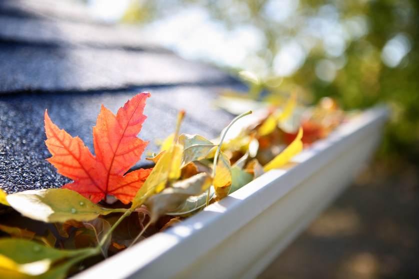 fall leaves gutter.jpg.838x0_q67_crop-smart.jpg